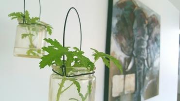 Hanging Glass Jar Flower Pots